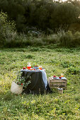 Romantic picnic with apples on grass