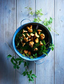 Chanterelles and leafy tendrils on moss in a vintage enamel container