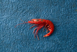 A red prawn on a blue surface