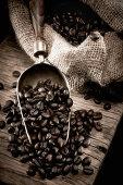 Coffee beans on a metal scoop
