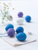 Blue and purple coloured eggs