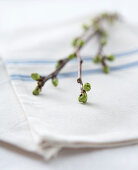 A spring branch with buds on a cloth napkin