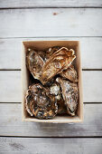 Fresh oysters in a wooden box