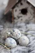 A nesting box with quail eggs