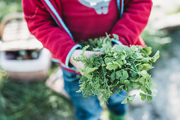 A person holding fresh herbs