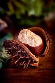 A horse chestnut in a split skin