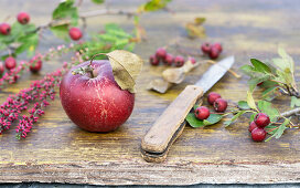 A red apple with a knife and hawthorn on a wooden table