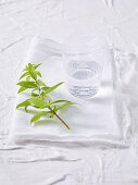 Lemon verbena and a glass of water on a white background