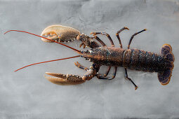 A lobster on a grey surface