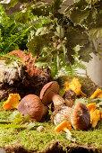 Fresh wild mushrooms on moss