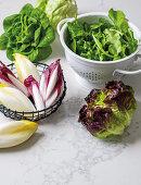 Assorted fresh leaf salad
