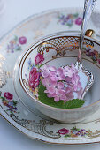 Lilac blossom in an antique collector's cup