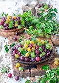 Fresh gooseberries