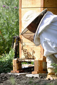 Female bee keeper watching hive activity