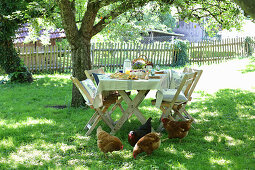 Table set for Easter meal in garden with hens in foreground
