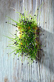 Chive-garlic sprouts