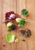 Radicchio, rocket, cos lettuce, oak leaf lettuce, lollo rosso, butterhead lettuce