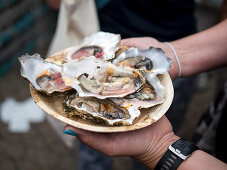 Hands holding a plate of fresh oysters