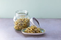 Mountain lentils germinating in a jar