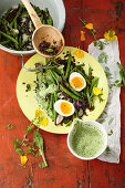 Lukewarm bean and beluga lentil salad with herb sauce and eggs