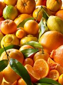 Overall of citrus fruit