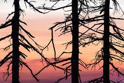 Harz, Saxony-Anhalt, mountain, climatic health resort, winter sports resort, recreation area, family vacation, hiking, landscape, sunset, dusk, pines, forest, bark beetle, deadwood, pest