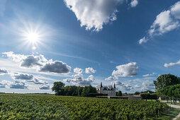 Chateau Pichon Baron , Weinbau, Medoc, Weingut, Weinreben,  Bordeaux, Gironde, Aquitanien , Frankreich, Europa