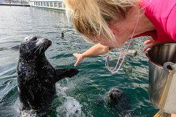 Seal Dog Show at the Marine Center in Warnemuende, Rostock, Baltic Sea Coast, Mecklenburg-Vorpommern Germany