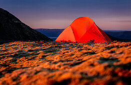 Orange tent on a moss covered mountain ridge during sun rise, Hofn, Vesturland, Iceland