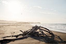 Treibholz am Strand des Hearst San Simeon State Parks\nam frühen Morgen, Kalifornien, USA.