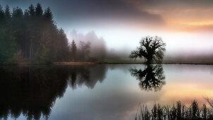 Neblige Herbststimmung am Fischweiher bei Bernried, Bayern, Deutschland