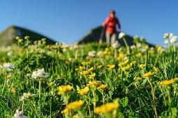 Frau beim Wandern unscharf im Hintergrund, Blumenwiese im Vordergrund, Belluneser Dolomiten, Venezien, Venetien, Italien
