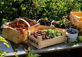Verschiedene Beeren in Spankörben