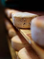 Wheels of cheese in a ripening chamber (Vogesen, Alsace)