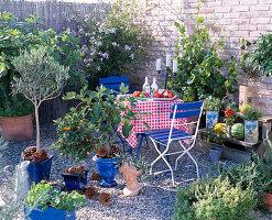 Vorher-Nachher-Terrasse: Ficus (Feigen), Olea (Olive)