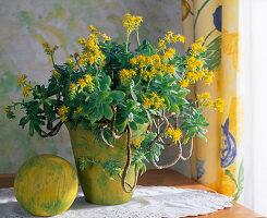 Aeonium arboreum in gelbem Topf, gelbe Kugel