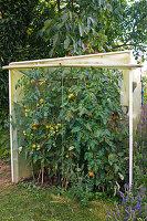 Mini - Tomatenhaus aus Folie
