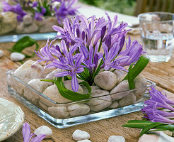 Tischdekoration mit Afrikanischer Schmucklilie