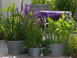 Alte Zinkwannen als Mini-Teiche für die Terrasse