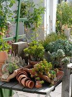Gemischte sukkulente Pflanzen in Terracotta auf Holztisch
