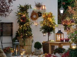 Rosen im Kübel winterfest verpackt mit Reisig, Strohmatten, Laub