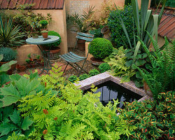 TERRACOTTA COURTYARD Garden with SMALL POND, TABLE AND CHAIR, Rodgersia, ASTILBE, PHORMIUM AND Osmunda . BRINSBURY COLLEGE'S COURTYARD Garden, CHELSEA