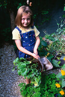 CONNIE HOLDS A TRUG FILLED with FRESHLY HARVESTED BEETROOT 'WODAN' IN THE DECORATIVE CHILDRENS POTAGER