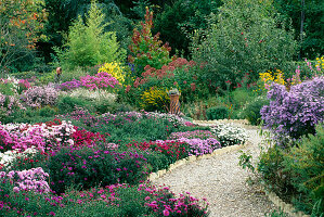 Aster at THE PICTON Garden, WORCESTERSHIRE, with Pink Aster Novae-angliae 'QUINTON MENZIES', HELIANTHUS 'Lemon Queen' AND EUPATORIUM PURPUREUM IN THE BACKGROUND