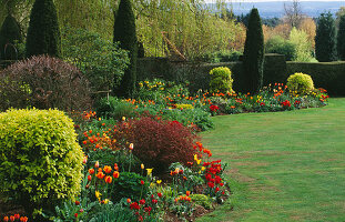 ST MICHAEL'S HOUSE, Kent: Red AND Orange Tulipa BORDER Beside THE LAWN BACKED by YEW HEDGES AND A MASSIVE Salix BABYLONICA