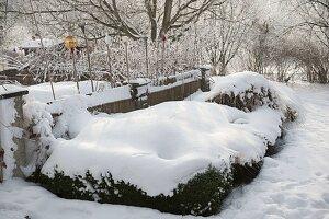 Verschneiter Garten mit Buxus (Buchs) und Gräsern