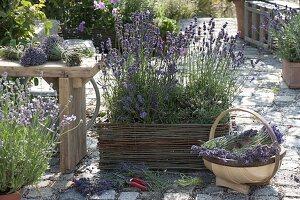 Duft-Terrasse mit Lavendel