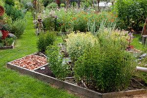 Kräuterbeet mit Pfefferminze (Mentha piperita) und Weinraute 'Variegata' (Ruta graveolens), Glasglocke, Wege mit Ziegelbruch und Baumscheiben, hinten Blumenbeete