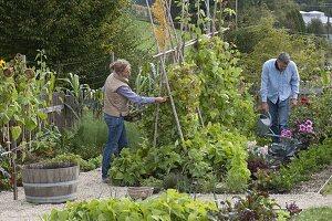 Gemüsegarten mit Buschbohnen, Stangenbohnen und Feuerbohnen
