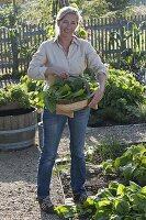 Frau mit frisch geerntetem Spinat 'Madator' (Spinacia oleracea)